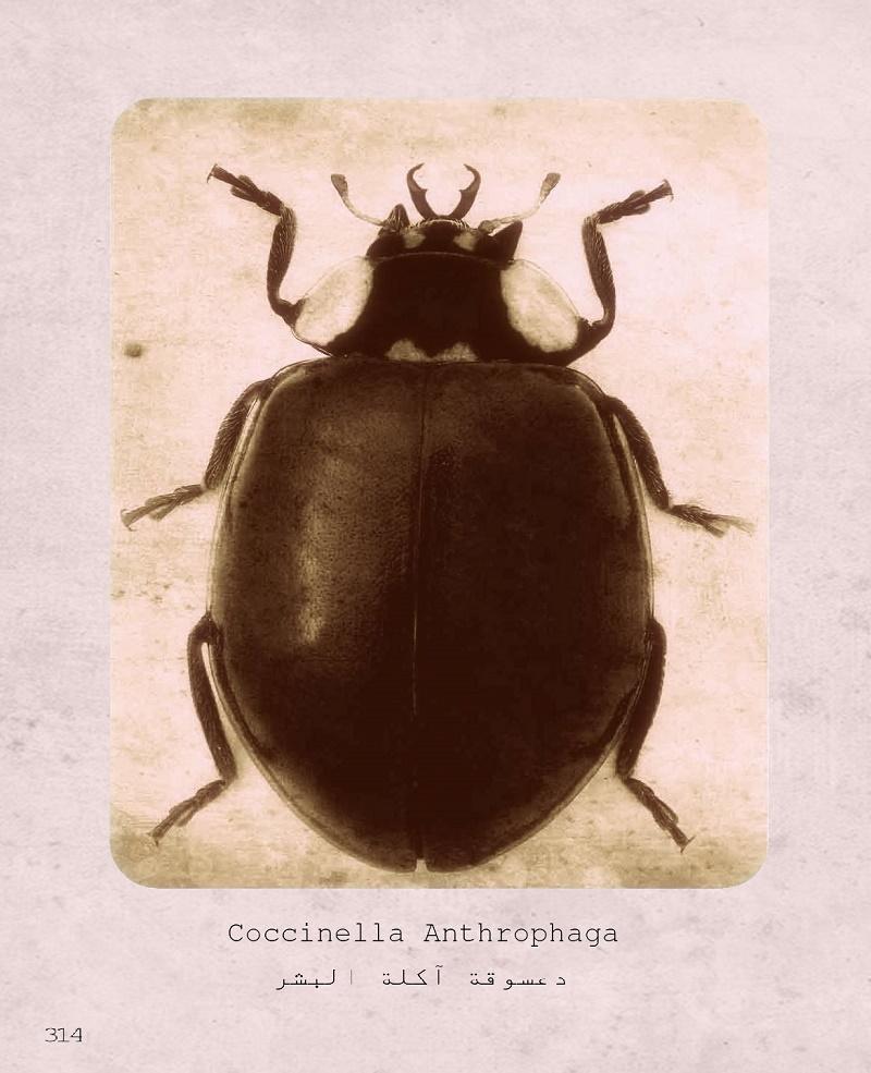 حشرة الشيطان, حشرة آكلة للبشر