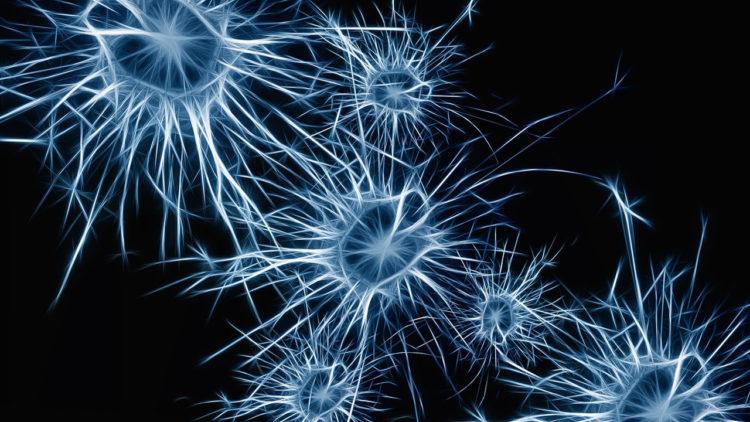 فلسفة, علم الأعصاب, إرادة حرة, أعصاب, مخ, تعديل عصبي