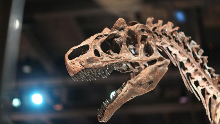 ديناصور, حفريات, علم الحفريات, علوم 2018