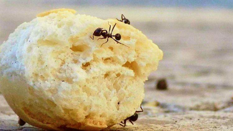 نمل, منزل, حشرات, بيئة