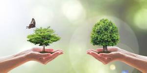 Hände, die Bäume halten