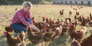 Frau füttert Hühner