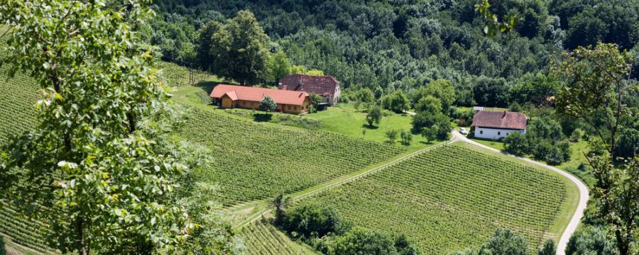 Weinlandschaft