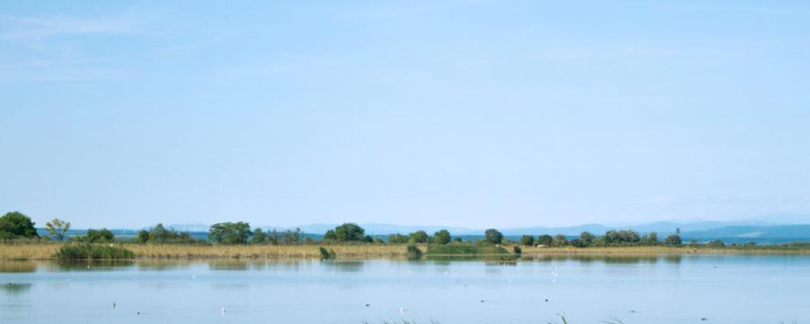 Blick auf den Neusiedler See