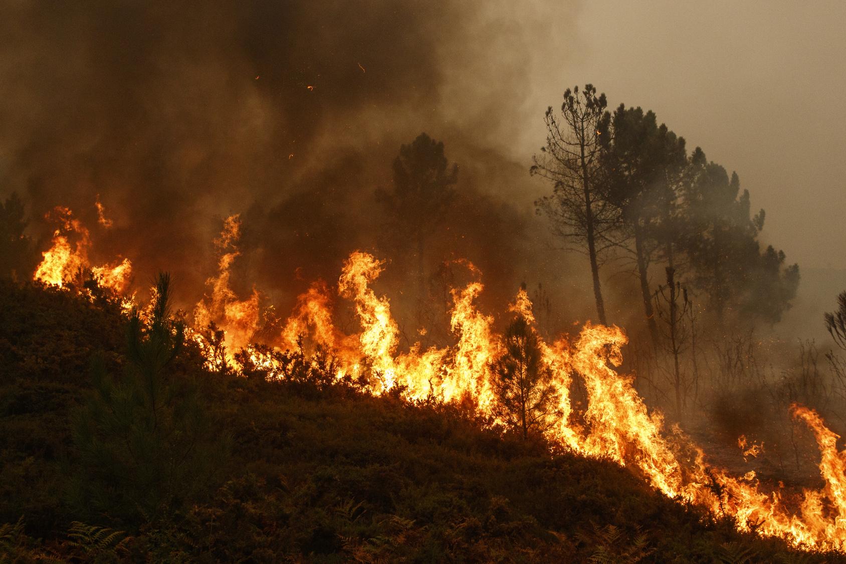 Feuerwehr muss für Waldbrände ausgerüstet werden