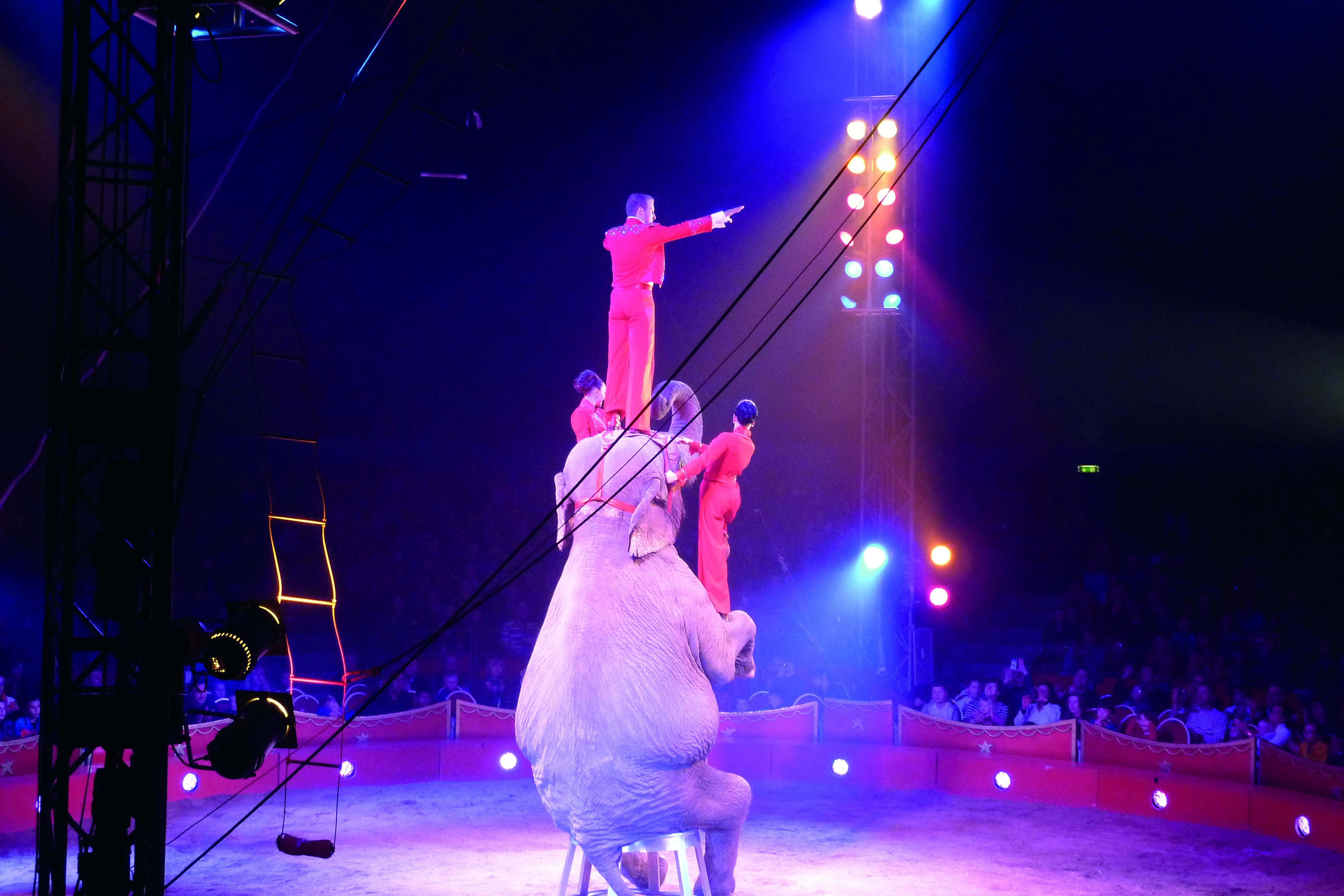 Elefant im Zirkus Knie