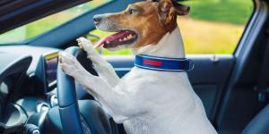Bringt der Hundeführerschein mehr Sicherheit?