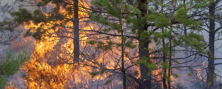 Die Zahl der Waldbrände in Deutschland steigt seit Jahren an