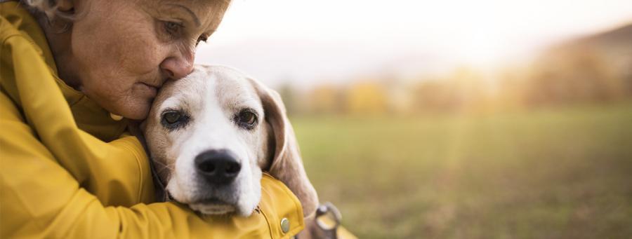 Leinenpflicht für Hunde in Berlin
