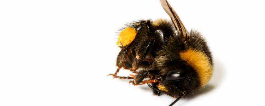 Es gibt einfache Methoden, das Bienensterben in Kommunen einzudämmen - wir haben Tipps für Sie
