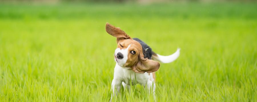 Rheinland-Pfälzische Kommunen nehmen weiterhin Hundesteuer.
