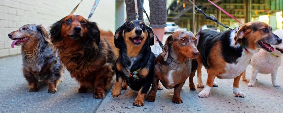 Hundesteuer und Welthundetag