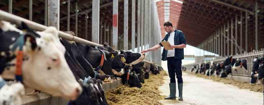 Deutschlands Bauernhöfen droht das Massensterben - Grund ist nicht nur der Nachwuchsmangel - für das Bild der Kommunen hat das massive Auswirkungen