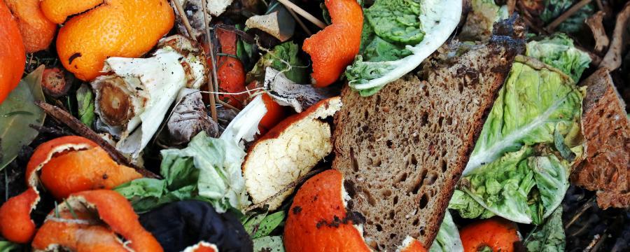 Verschiedene Start-Ups sagen Lebensmittelverschwendung den Kampf an.