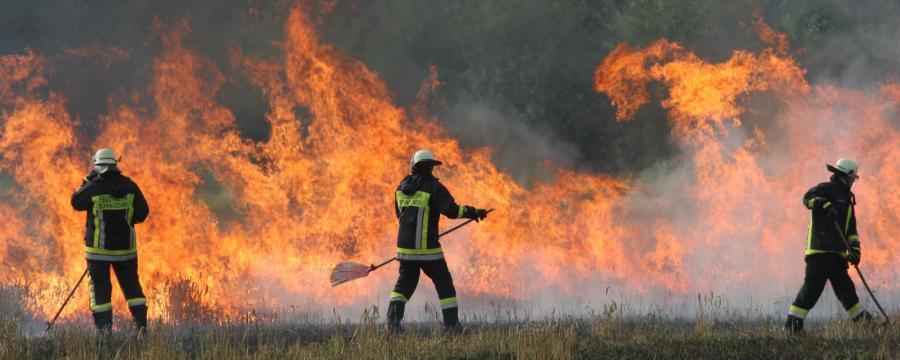 Ein Weizenfeld brennt, die Feuerwehr löscht.