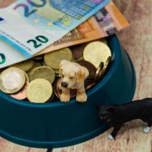 Die Diskussion um die Hundesteuer entbrennt regelmässig - welche Bedeutung die Steuer hat und wie Kommunen damit umgehen