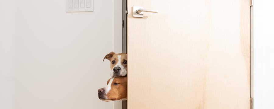 Hundesteuer Kommunen