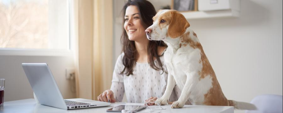 Homeoffice: Frau und Hund vor dem Laptop