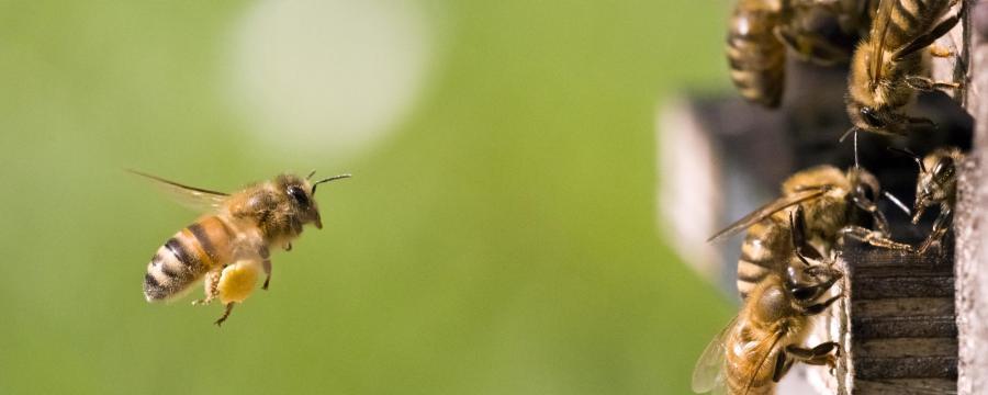 Bienen fliegen in ihren Bienenstock – Futterautomat