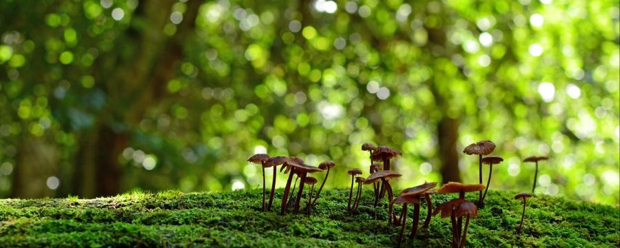 Biodiversität und gesunde Natur