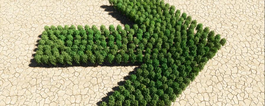 Klimawandel: Hier geht es zur Beratung