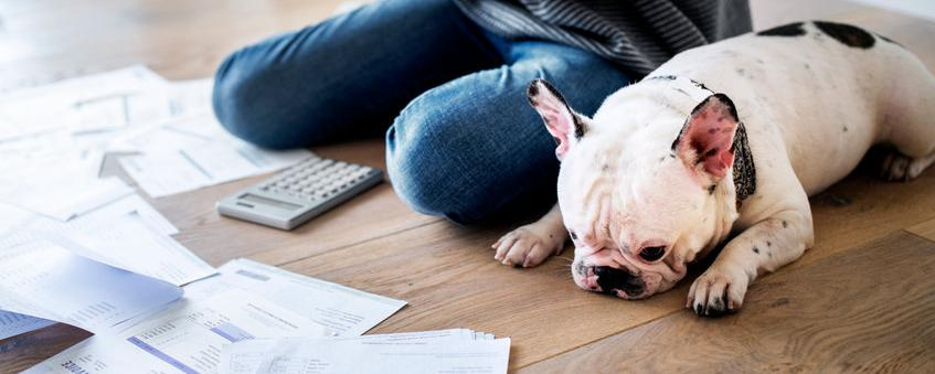 Die Hundesteuer erhitzt immer wieder die Gemüter - alle Fakten - von Recht bis kurios