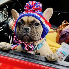 Eine Bulldogge als Bürgermeister - und der ist auch noch käuflich! Alles über die tierische Wahl einer Stadt in den USA