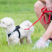 CSI-Hundescheisse - Hundekot ist in fast allen Kommunen ein Problem - warum eine Gemeinde mit einem DNA-Test scheiterte...