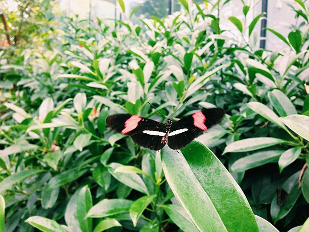 Schmetterling im Zoo