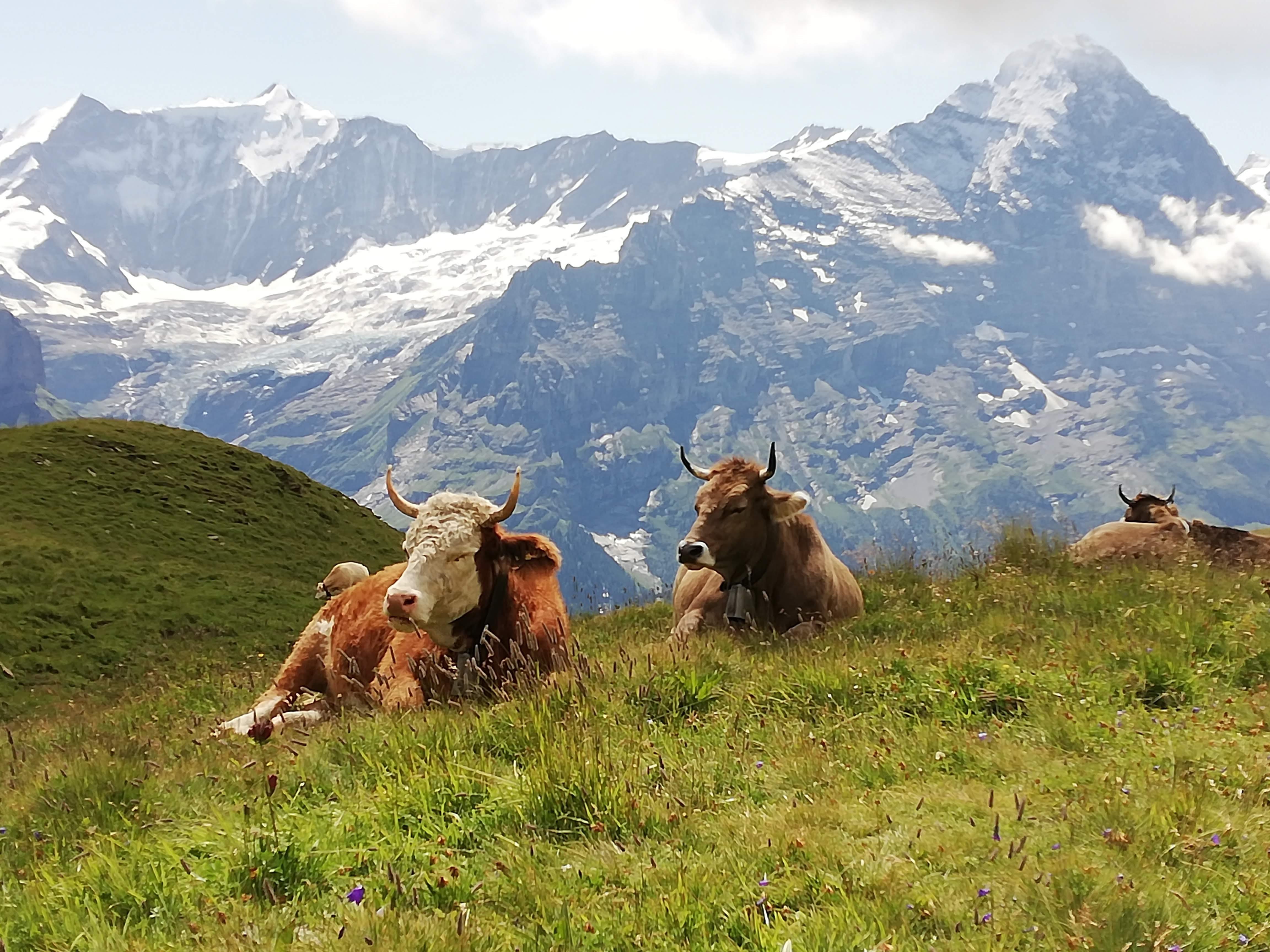 Appartement de vacances Schulerszaun 1 2 Bett Wohnung (2691731), Grindelwald, Région de la Jungfrau, Oberland bernois, Suisse, image 4