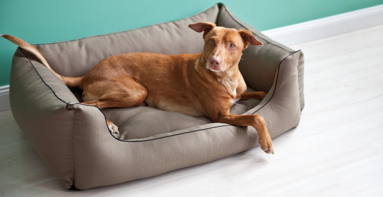Schöne Hundebetten hundeaccessoires rabatte bis zu 70 westwing