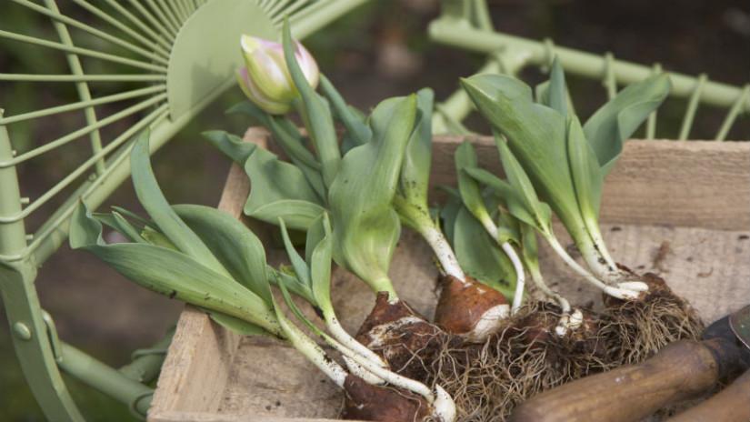 Blumenbeet anlegen mit Setzlingen