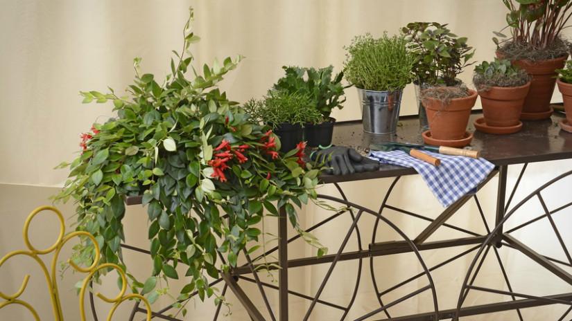 Terrasse bepflanzen und schön arrangieren