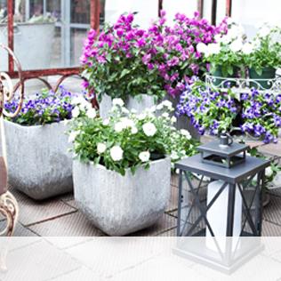 Balkonpflanzen Bis Zu 70 Rabatt Westwing