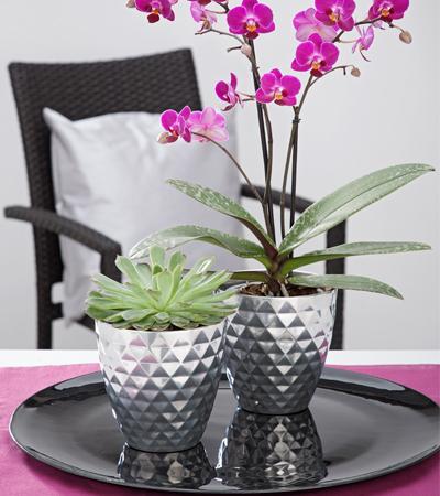 Scheurich Orchid
