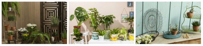 Decoración exterior plantas