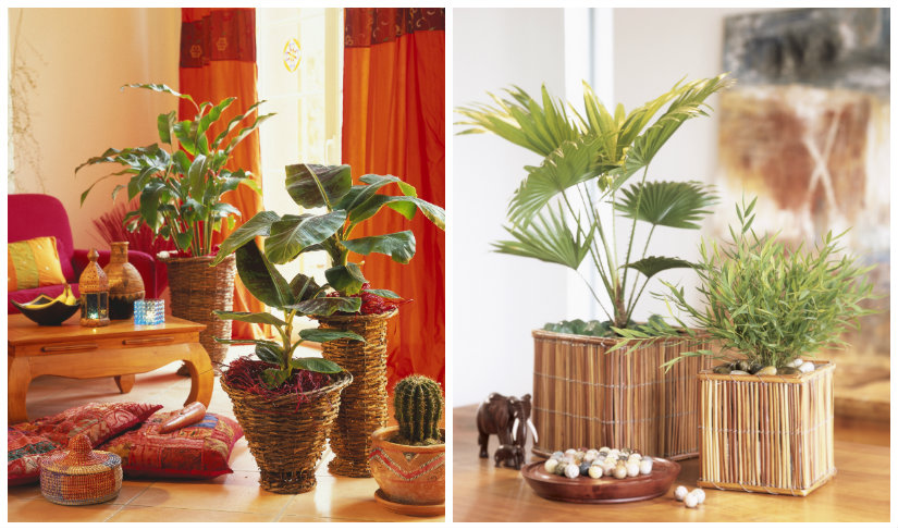 Macetas y macetero para casa con westwing for Casas decoradas con plantas de interior