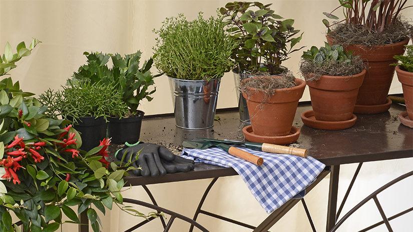 jardín, guantes de jardinería