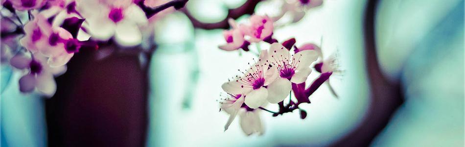 Primavera: verde que te quiero verde