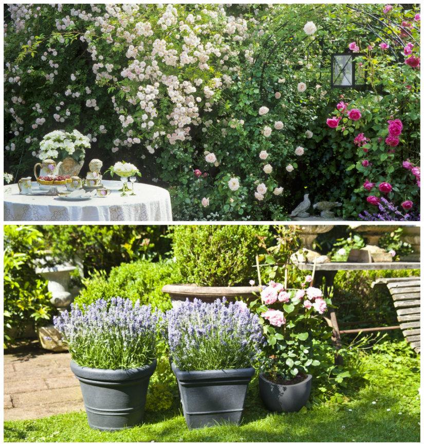 jardines de primavera con flores