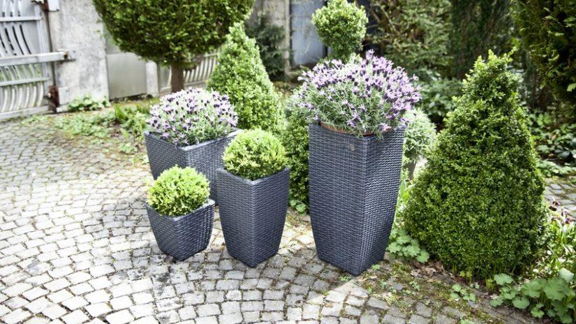 Patio con flores rod ate de belleza y color westwing for Decoracion de patios con macetas
