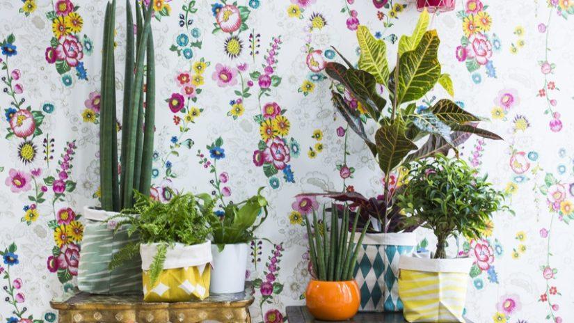 estilo mexicano con plantas