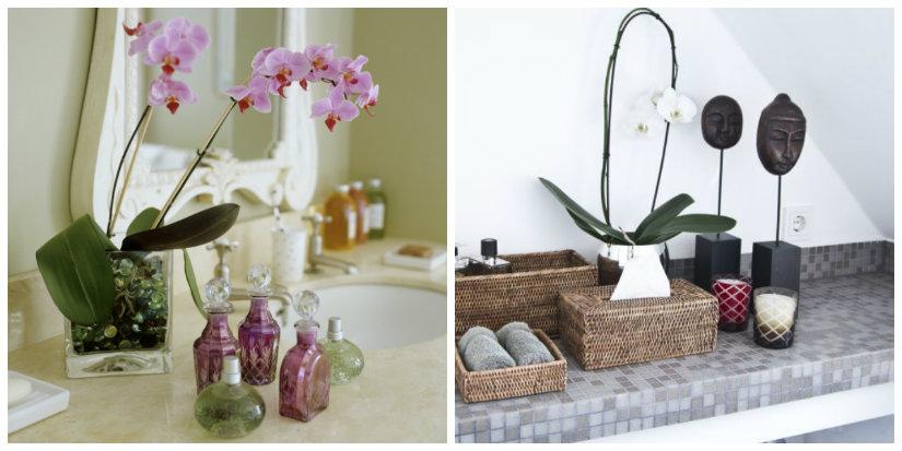 feng shui en el baño flores y plantas