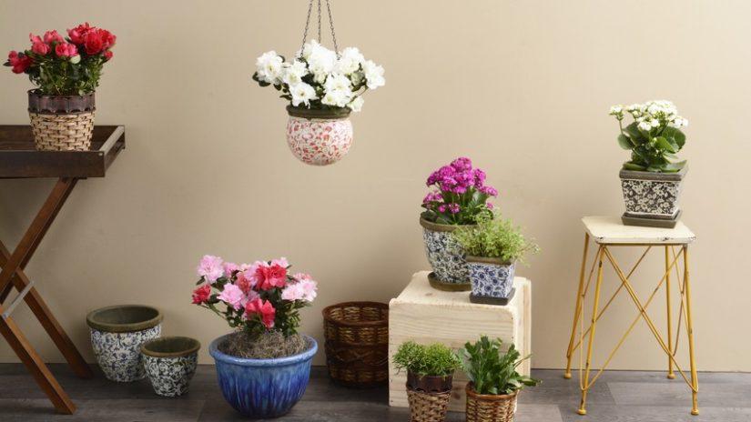 Balcones con plantas y flores