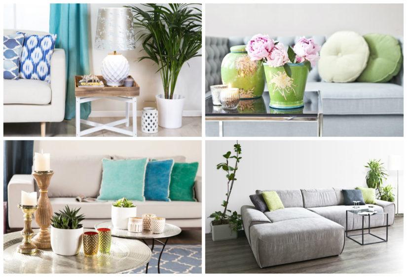 Decoraci N Con Plantas De Interior Flores Dentro De Casa