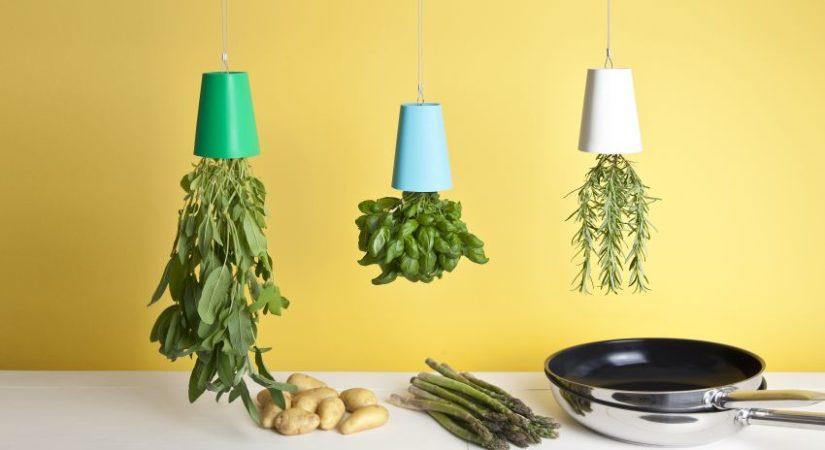 decorar con plantas de interior colgantes