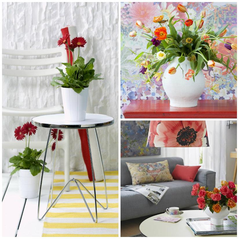 plantas rojas para casa
