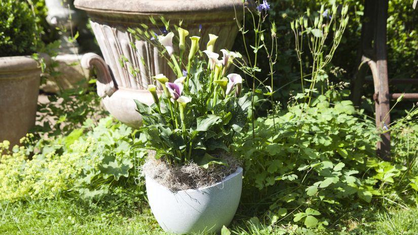 fontaine de jardin, pot de fleur, pot en terre cuite