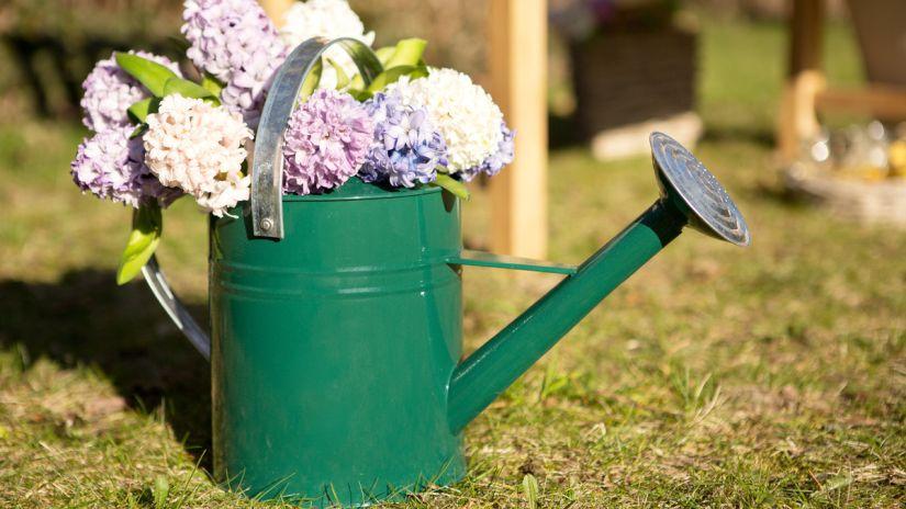 fontaine de jardin, arrosoir, fleurs