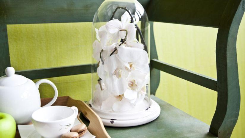 Guirlande de fleurs blanches sous cloche en verre